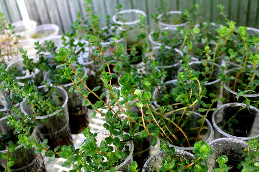 Plant Pods - BetterWeather