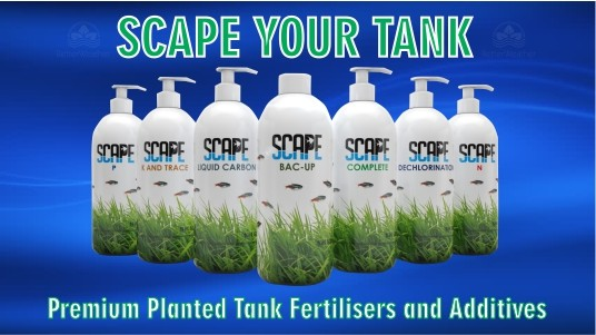 Scape your tank